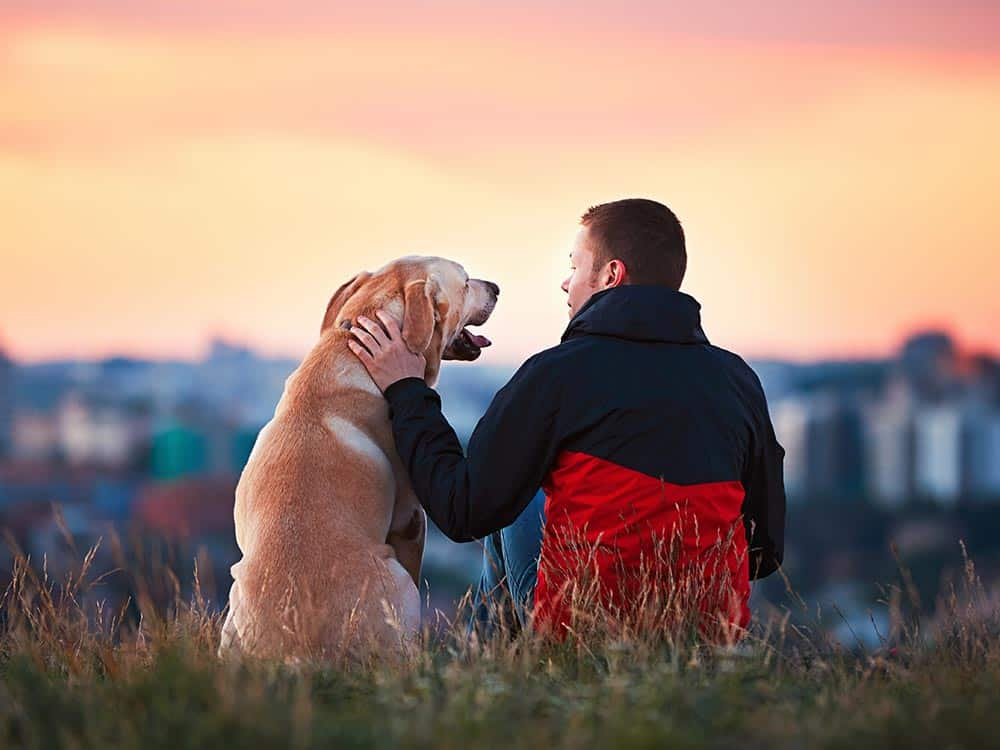 dog with owner at sunset