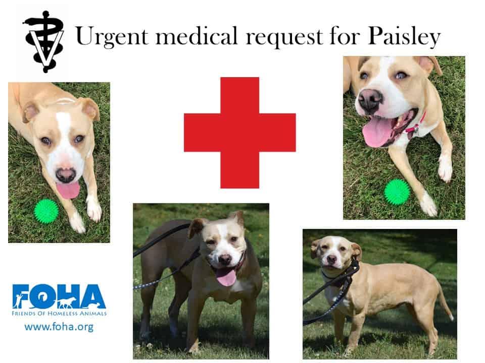 Paisleymedical