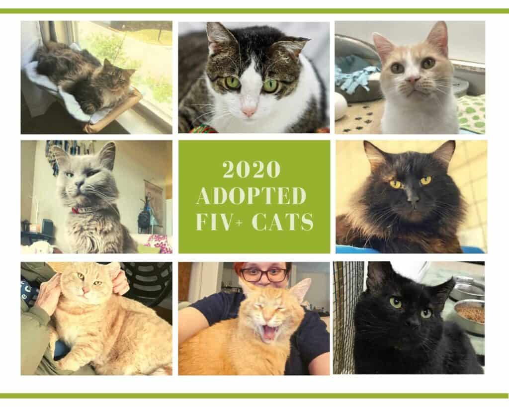 BLOG - Adopted FIV Positive Cats
