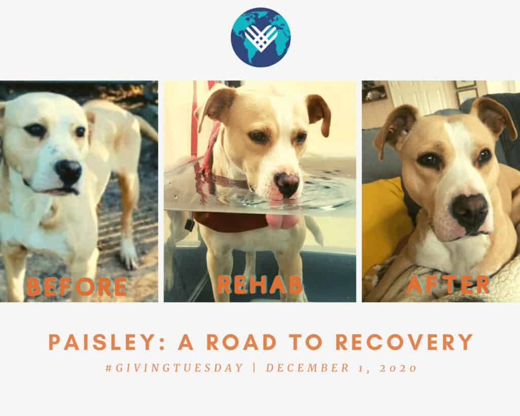Paisley_ a road to recovery