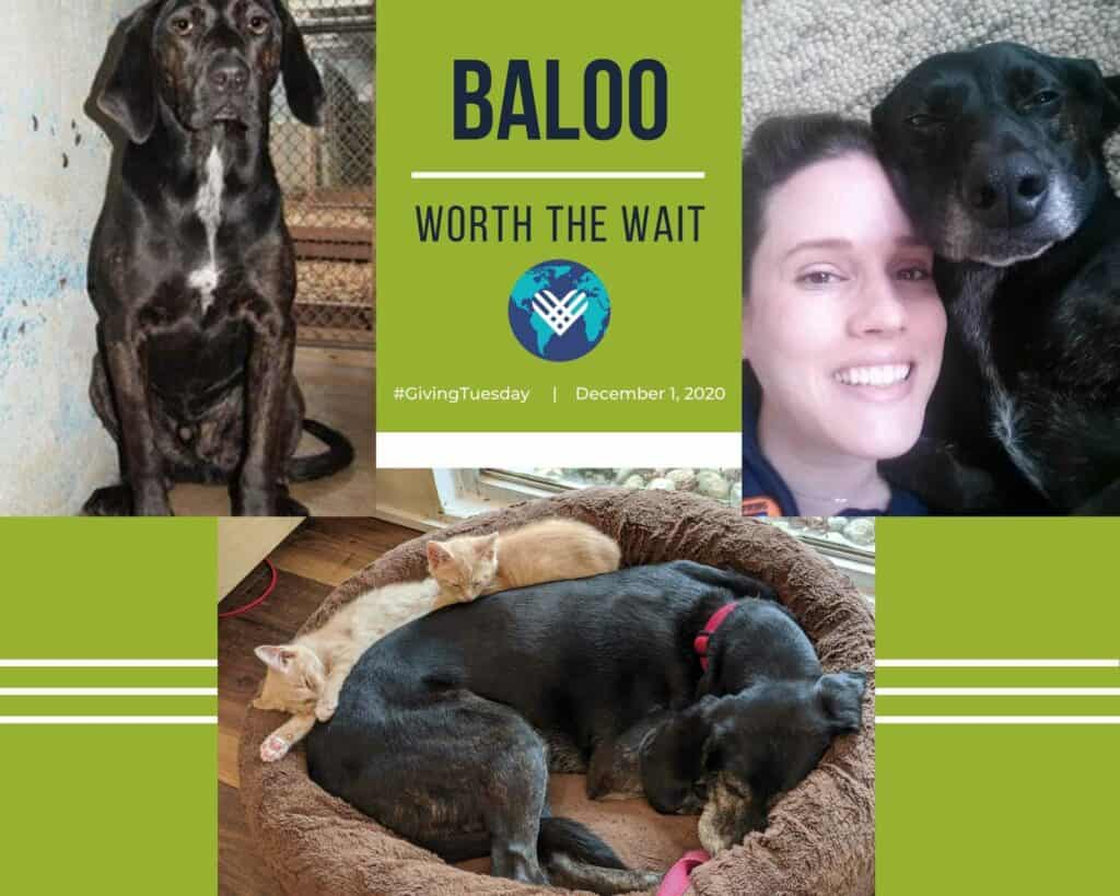 Baloo (1)
