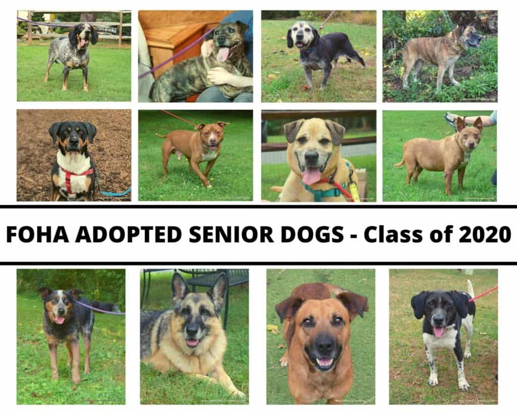 FOHA ADOPTED SENIOR DOGS - Class of 2020