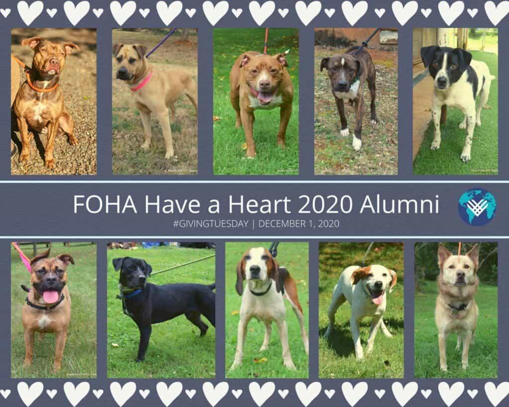 FOHA Have a Heart 2020 Alumni