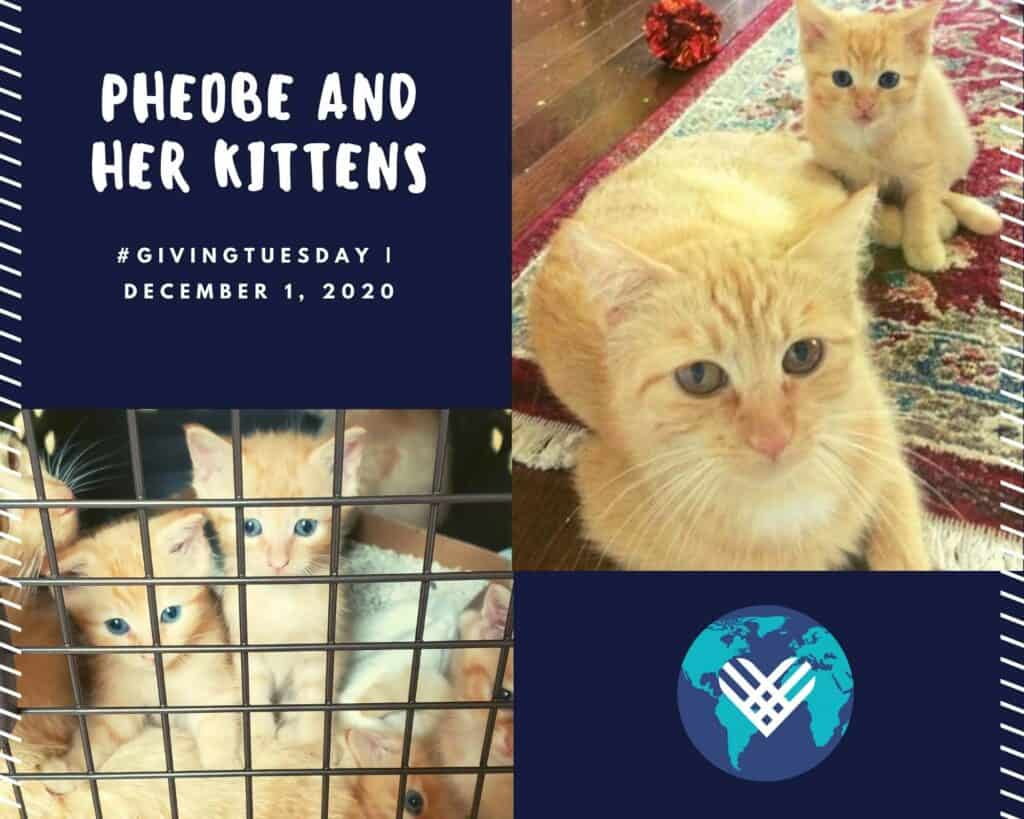 Pheobe and her kittens