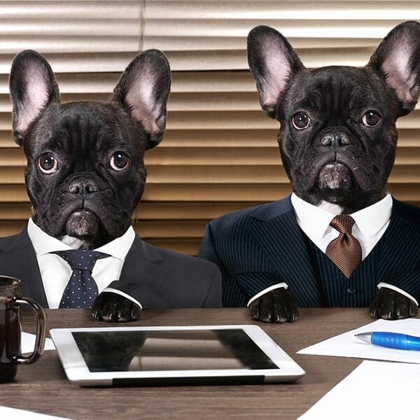 Dogs in tiny business suits